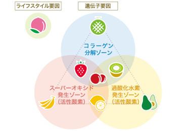 肌老化関連遺伝子の特徴